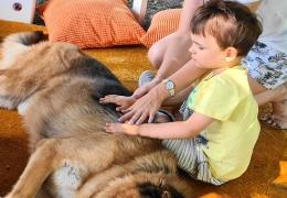 instytut-gluchoniemych-dogoterapia-3